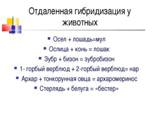 Отдаленная гибридизация у животных Осел + лошадь=мул Ослица + конь = лошак Зу
