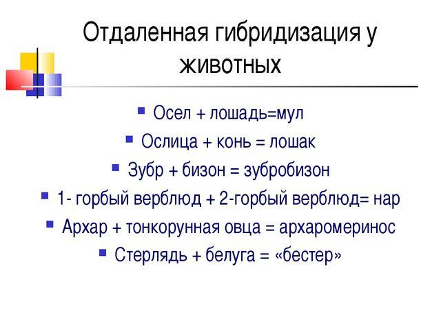 Отдаленная гибридизация у животных Осел + лошадь=мул Ослица + конь = лошак Зу...