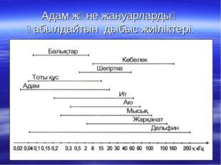 Адам және жануарлардың қабылдайтын дыбыс жиіліктері.