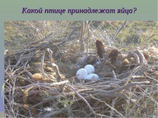 Какой птице принадлежат яйца?