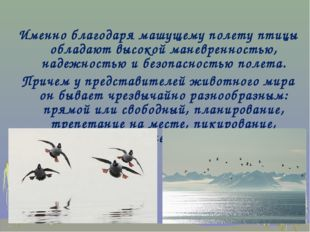 Именно благодаря машущему полету птицы обладают высокой маневренностью, наде