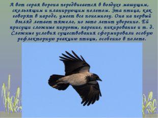 А вот серая ворона передвигается в воздухе машущим, скользящим и планирующим