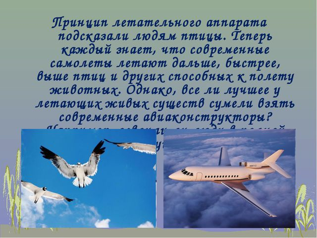 Принцип летательного аппарата подсказали людям птицы. Теперь каждый знает, чт...