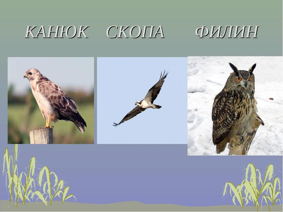 КАНЮК СКОПА ФИЛИН