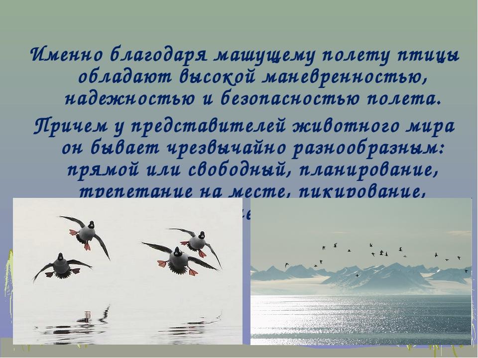 Именно благодаря машущему полету птицы обладают высокой маневренностью, наде...