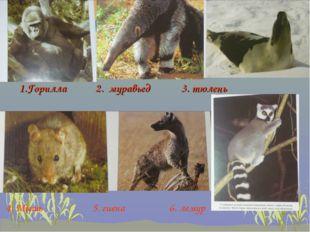 1.Горилла 2. муравьед 3. тюлень 4. Мышь 5. гиена 6. лемур