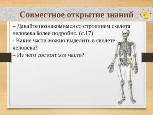 Совместное открытие знаний – Давайте познакомимся со строением скелета челов