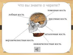 лобная кость теменная кость затылочная кость височная кость Что вы знаете о