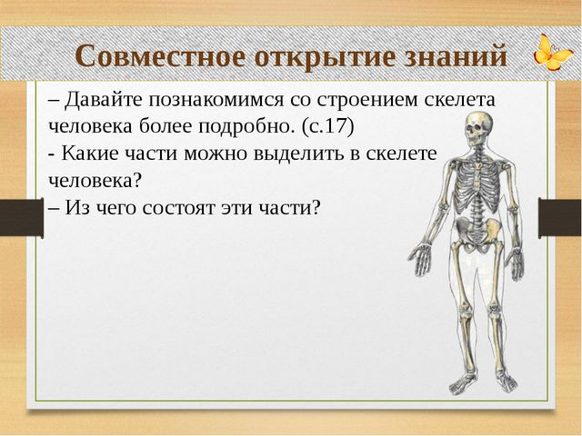 Совместное открытие знаний – Давайте познакомимся со строением скелета челов...