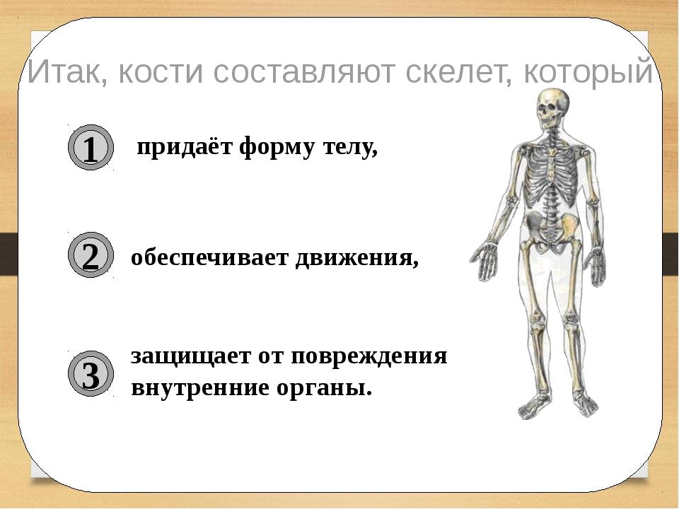 придаёт форму телу, обеспечивает движения, защищает от повреждения внутренни...