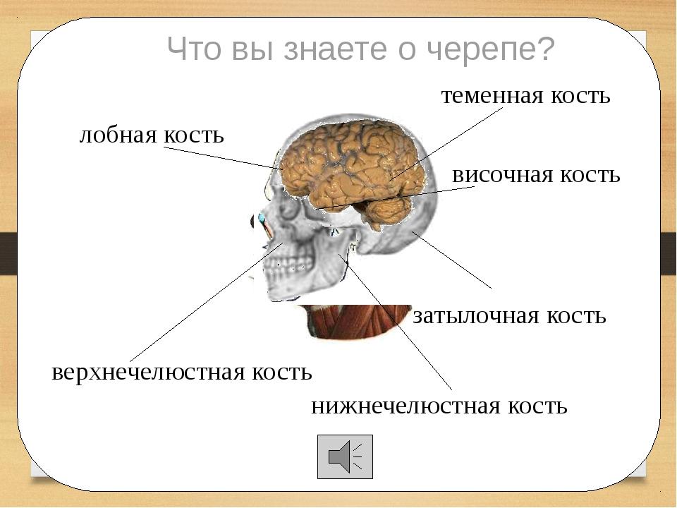 лобная кость теменная кость затылочная кость височная кость Что вы знаете о...
