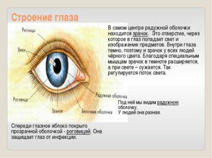 Строение глаза Спереди глазное яблоко покрыто прозрачной оболочкой - роговице