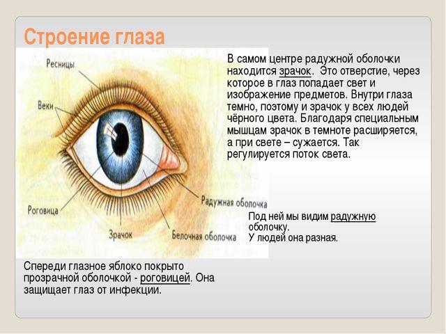 Строение глаза Спереди глазное яблоко покрыто прозрачной оболочкой - роговице...