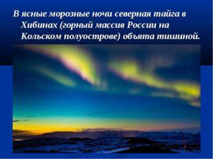 В ясные морозные ночи северная тайга в Хибинах (горный массив России на Кольс