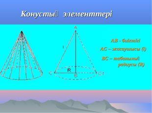 Конустың элементтері АВ - биіктігі АС – жасаушысы (l) ВС – табанының радиусы