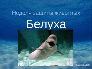Неделя защиты животных Белуха Жарикова В.М.