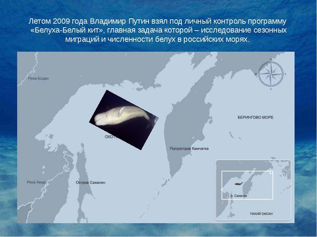 Летом 2009 года Владимир Путин взял под личный контроль программу «Белуха-Бел...