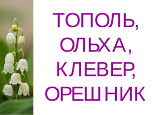 ТОПОЛЬ, ОЛЬХА, КЛЕВЕР, ОРЕШНИК
