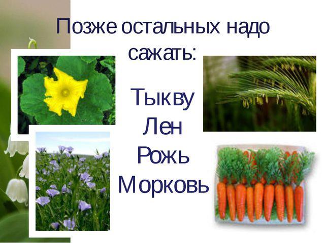 Позже остальных надо сажать: Тыкву Лен Рожь Морковь