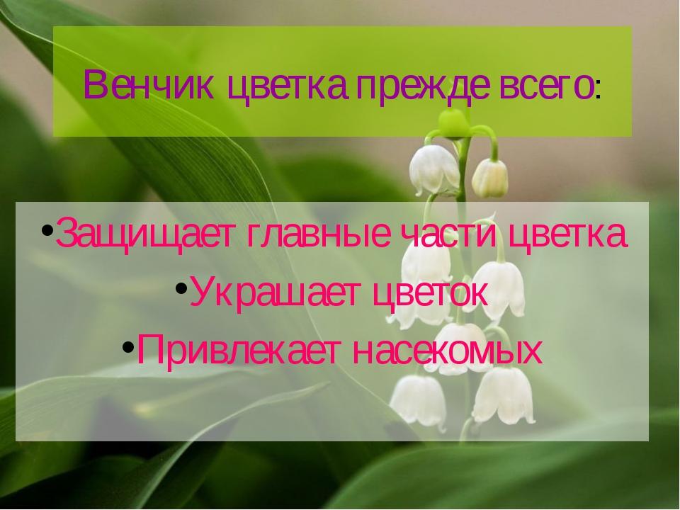 Венчик цветка прежде всего: Защищает главные части цветка Украшает цветок При...