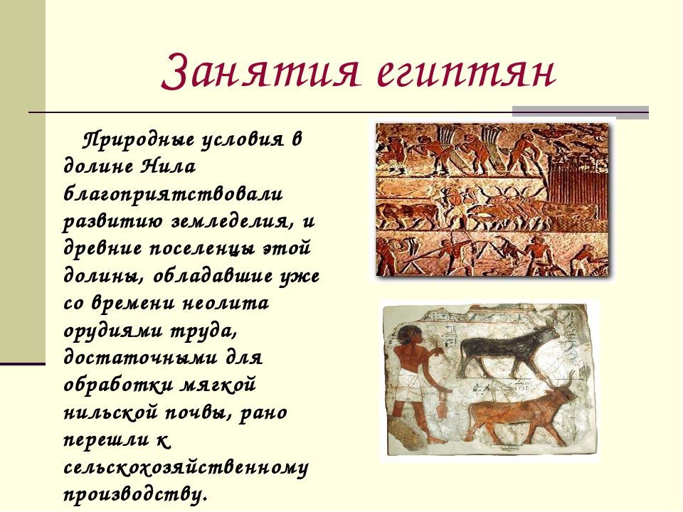 Занятия египтян Природные условия в долине Нила благоприятствовали развитию з...