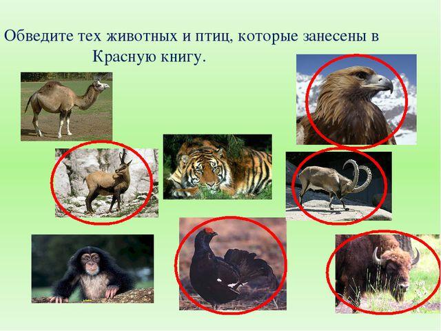Обведите тех животных и птиц, которые занесены в Красную книгу.