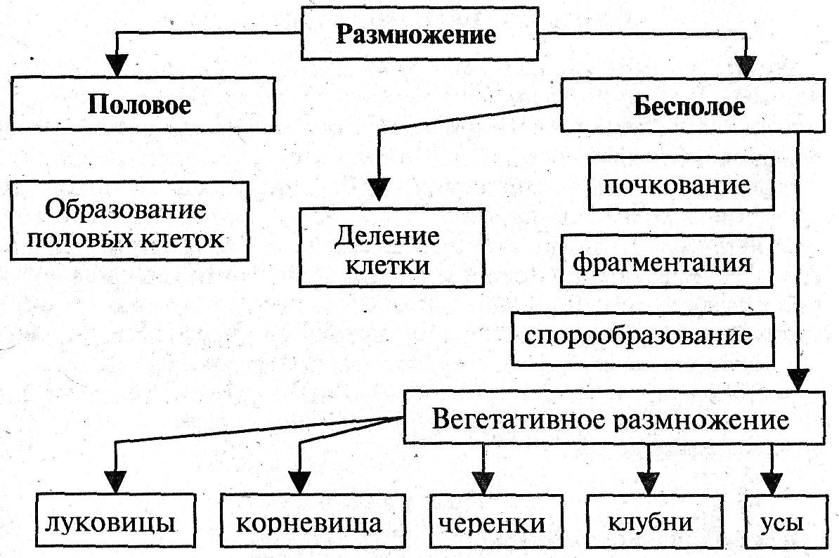 знакомство русских девушек вич инфицированных