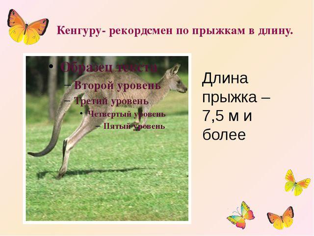 Кенгуру- рекордсмен по прыжкам в длину. Длина прыжка – 7,5 м и более