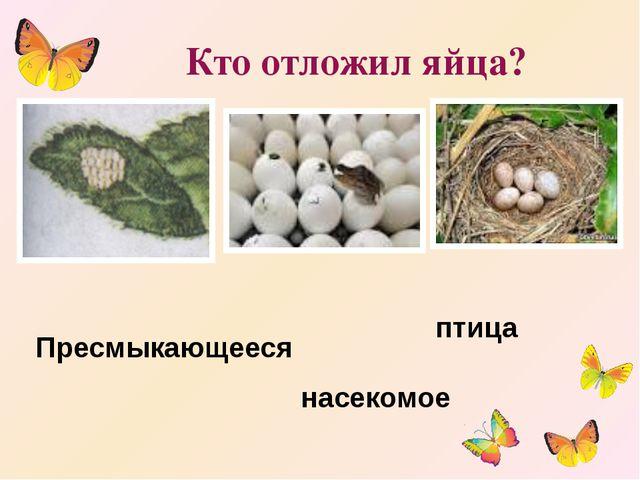 Кто отложил яйца? насекомое птица Пресмыкающееся