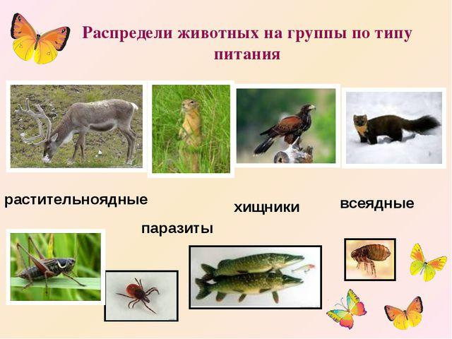 Распредели животных на группы по типу питания растительноядные хищники парази...