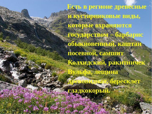 Есть в регионе древесные и кустарниковые виды, которые охраняются государств...