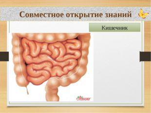 Совместное открытие знаний Кишечник