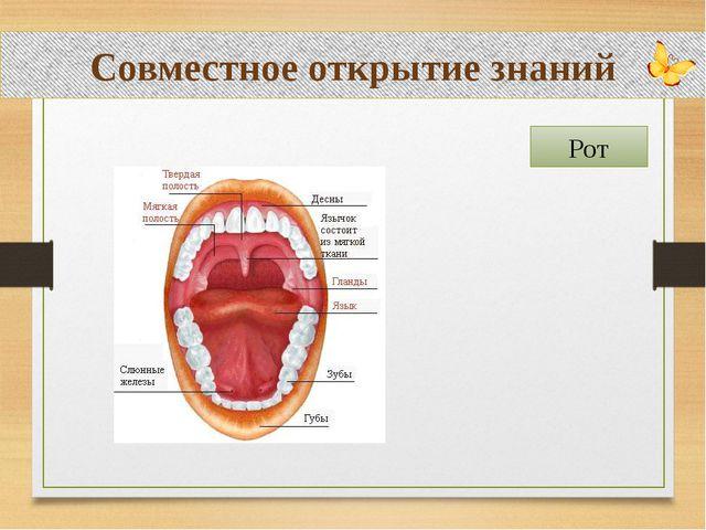 Совместное открытие знаний Рот