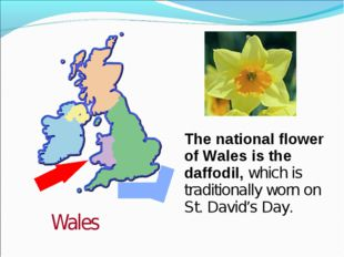 The national flower of Wales is the daffodil, which is traditionally worn on