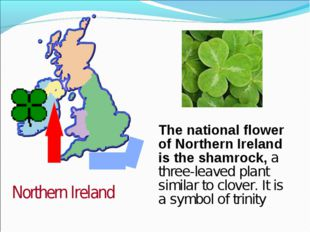 The national flower of Northern Ireland is the shamrock, a three-leaved plant