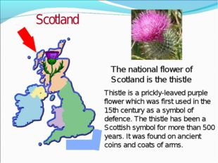 Thistle is a prickly-leaved purple flower which was first used in the 15th ce
