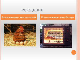 РОЖДЕНИЕ Высиживание яиц наседкой Использование инкубатора