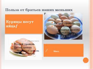 Польза от братьев наших меньших Курицы несут яйца→ ← Мясо