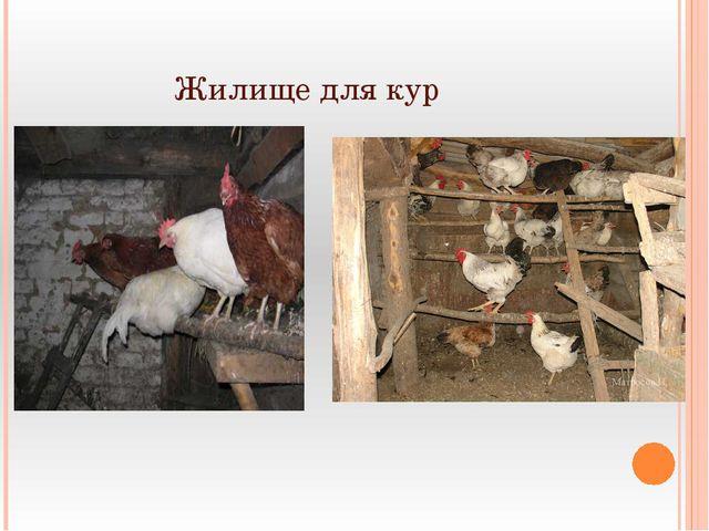 Жилище для кур