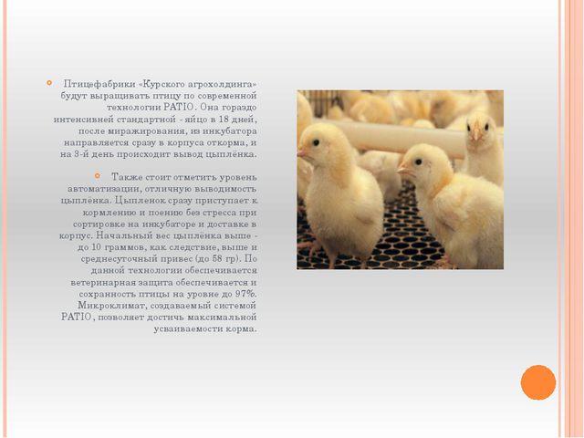 Птицефабрики «Курского агрохолдинга» будут выращивать птицу по современной те...