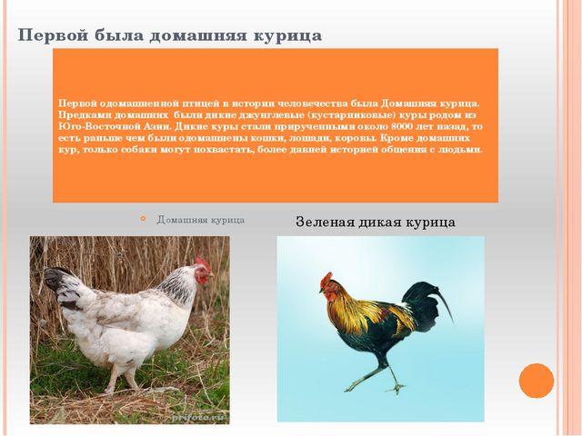 Первой была домашняя курица Первой одомашненной птицей в истории человечеств...
