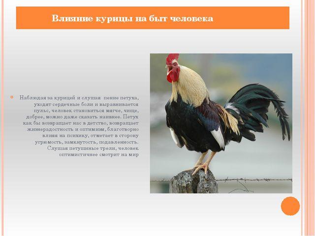 Наблюдая за курицей и слушая пение петуха, уходят сердечные боли и выравнивае...