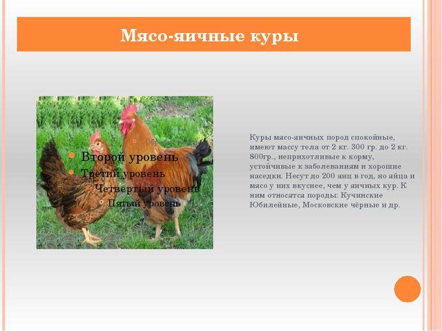 Куры мясо-яичных пород спокойные, имеют массу тела от 2 кг. 300 гр. до 2 кг....