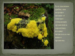 Есть плесневые грибки, они получают питание от гниющих отмирающих организмов