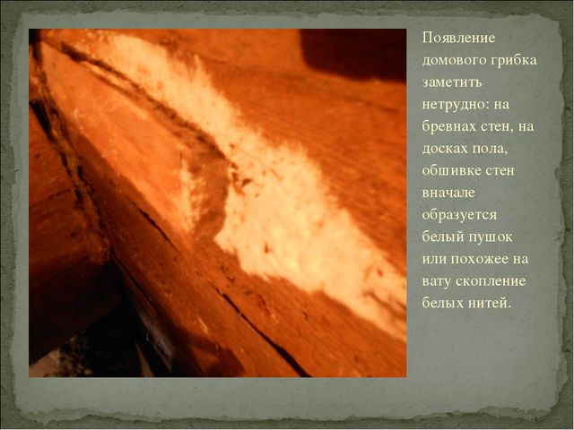 Появление домового грибка заметить нетрудно: на бревнах стен, на досках пола,...