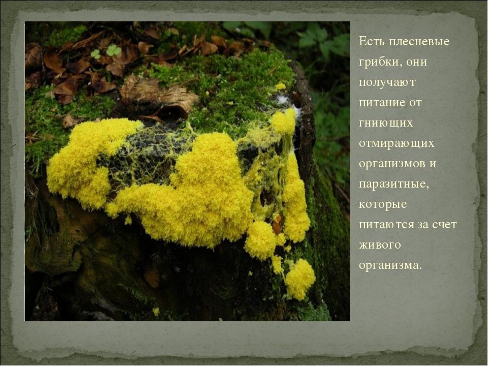 Есть плесневые грибки, они получают питание от гниющих отмирающих организмов...