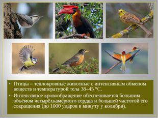 Птицы – теплокровные животные с интенсивным обменом веществ и температурой те