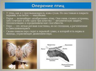 У птиц, как и у пресмыкающихся, кожа сухая. Но она тонкая и покрыта перьями,