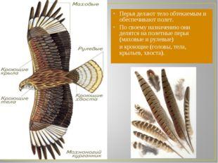Перья делают тело обтекаемым и обеспечивают полет. По своему назначению они д