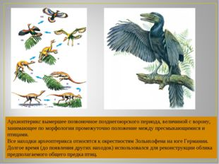 Архиоптерикс вымершее позвоночное позднегоюрского периода, величиной сворону